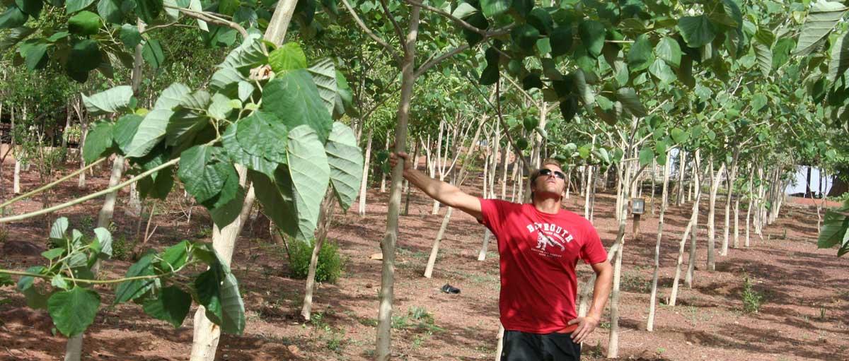 plantation-gmelina2_02.jpg
